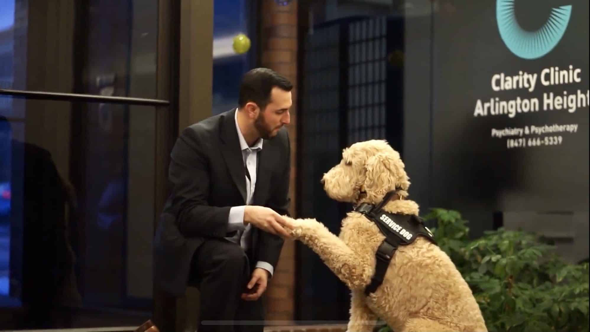 Harvey the therapy dog in Chicago